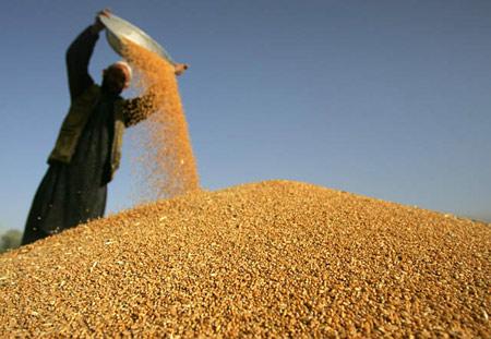 穀物は流通前のロスも大きく、これが貧困問題の一因になっているとも言えます。