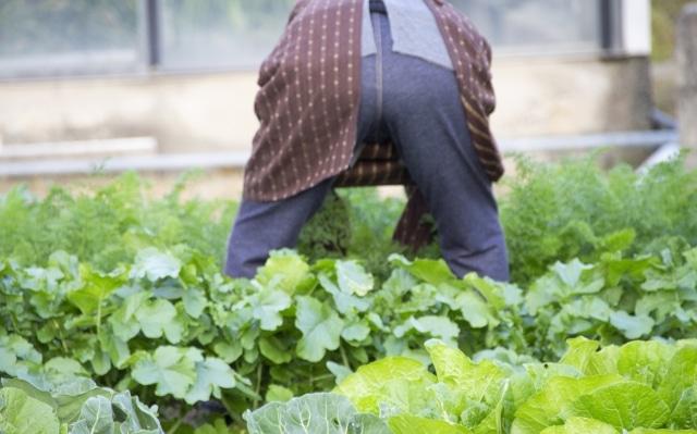 農業 高齢化